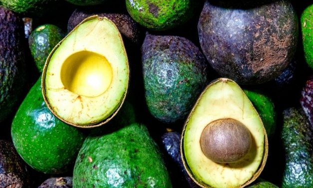 Abacate – Fruta da Época