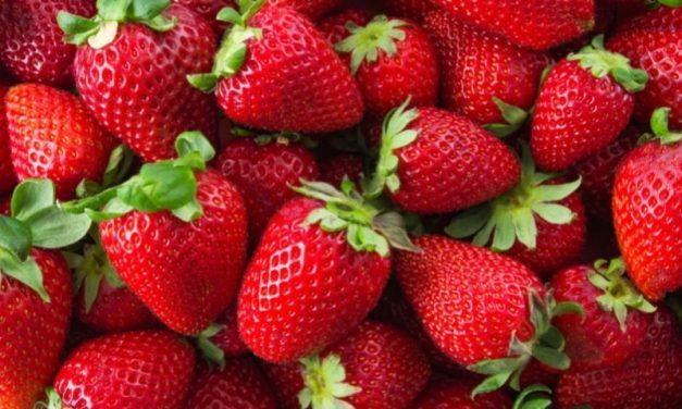 Morango – Fruta Da Época